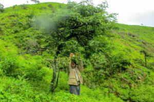 Senasa - Uso de controladores biológicos en cultivos de tara frente a fenómenos climáticos