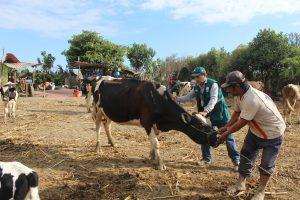 Senasa brinda atención a ganaderos afectados por el desborde del río La Leche