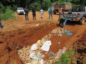Senasa - Comiso de aves y despojos de cerdo de procedencia brasileña