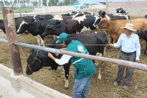 Senasa y MEF buscan mejorar sanidad animal en zonas rurales