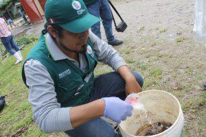 Senasa y pobladores buscan reducir incidencia de caracol gigante africano en Selva Central