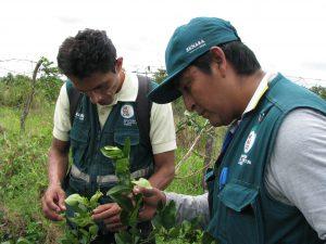 Senasa - Monitoreo de cultivo de limon en sectores de frontera
