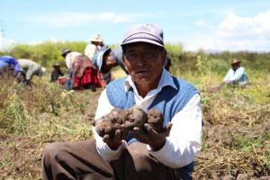 Senasa - Cosecha de ECA en Puno produce tubérculos sanos