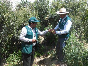 Senasa - Inspección fitosanitaria de predios seleccionados en Tacna para la prevención de plagas