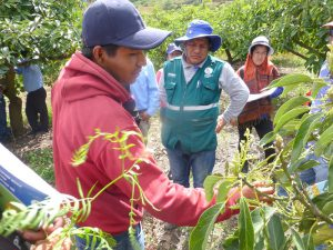 Senasa - Implementación de Meta 36 beneficiará a 50 mil productores
