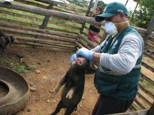 Senasa resguarda sanidad pecuaria en distrito de Casitas, en Tumbes