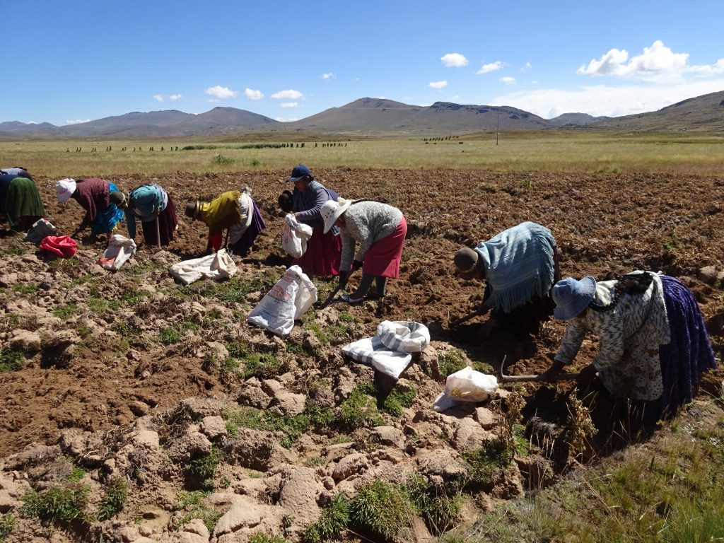 Senasa: Puno celebra el 48 aniversario del Día del Campesino con emprendimientos