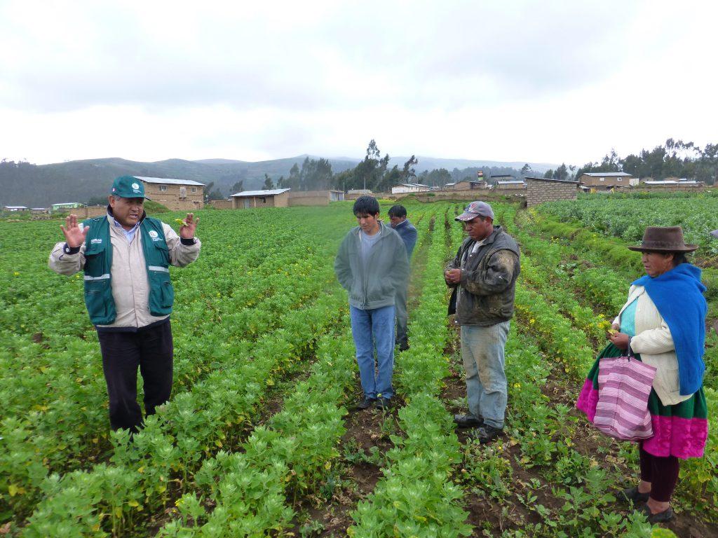 Apurímac: Senasa y agricultores buscan reducir uso de plaguicidas en cultivos