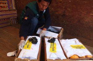 Senasa - Lima - Inspeccion en el Mercado de Frutas