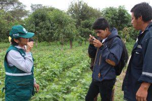 Senasa - Agricultores de Motupe aprenden a reconocer plagas y controladores biologicos en los cultivos de menestras