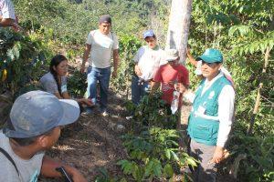 Senasa - Evaluacion de cultivos de cafe