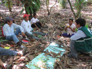 Senasa y productores desarrollan acciones para optimizar producción de cacao Chuncho