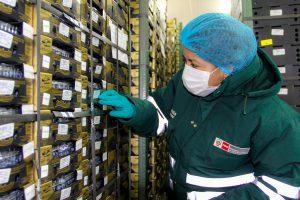 Senasa - Arandanos de Ancash exportados a China