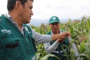 Senasa - Evaluación fitosanitaria en distritos afectados por volcán Sabancaya