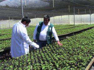 Senasa - Visita de oficio - cuarentena cafe H1 en Enenas - Villa Rica 1