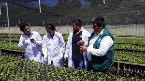 Senasa - Visita de oficio - cuarentena cafe H1 en Enenas - Villa Rica