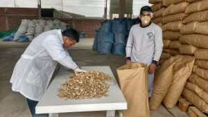 Senasa certifica ocho toneladas de kion para su exportación a Holanda