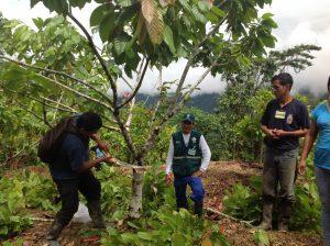Senasa fortalece capacidades de productores durante desarrollo de ECA en MIP del Cacao