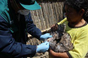 Senasa prioriza monitoreo de influenza aviar en predios de aves cercanos a humedales