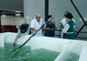 Senasa y SAG Chile certifican nuevas plantas de tratamiento hidrotérmico para mango