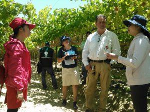 Senasa garantiza estado fitosanitario de uva de mesa para exportación a Vietnam
