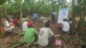 ECA brinda aprendizaje en métodos de control de plagas de plátano