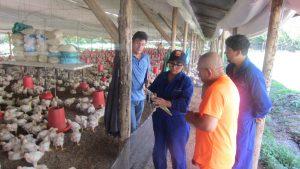 Senasa renovó licencia sanitaria de apertura y funcionamiento a granja avícola en Amazonas