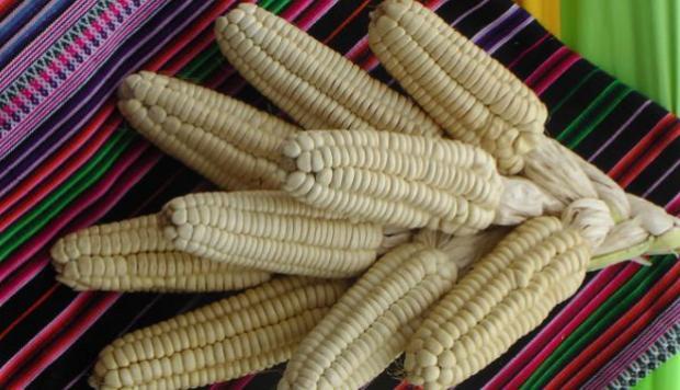 Maiz-Cusco