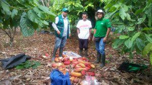 Senasa - Evaluacion de campos de cacaotales en Puerto Bermudez - Oxapampa - Pasco