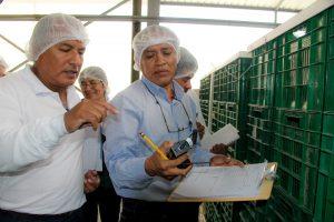 Senasa busca asegurar futuras exportaciones de mango a mercado asiático