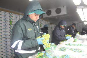Senasa certificó más de 6 mil toneladas de uva para exportación