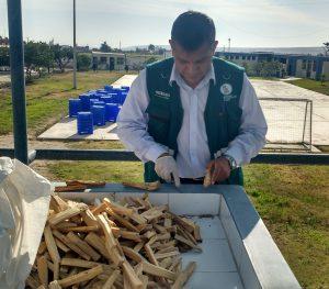 Senasa certifica 2.5 toneladas de palo santo para su exportación a Chile