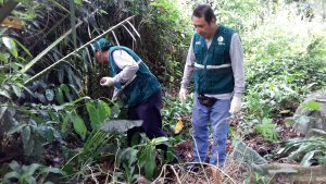 Senasa constata baja incidencia de caracol gigante africano en campos de cultivo de Juanjuí