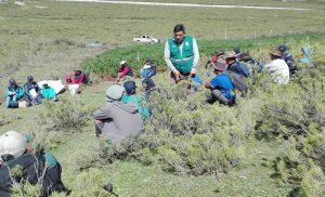 Senasa fomenta el MIP en papa en zonas altoandinas de Apurímac