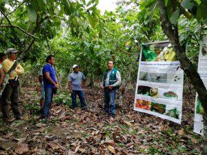 Senasa - Cacaoteros de Alto Cachiyacu beneficiados con Escuela de Campo