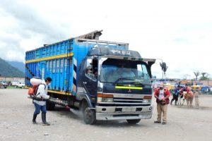 Senasa protege actividad pecuaria con emisión de Certificado Sanitario de Tránsito Interno