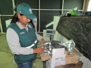 Madre de Dios - Senasa certifica más de 249 mil kilos de castaña para exportación