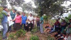 Senasa - Clausuran Escuelas de Campo enfocadas en el cultivo de café en Cañaris y Salas