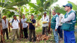 Senasa - ECA de banano y plátano dominico fortalecieron conocimientos de productores en MIP