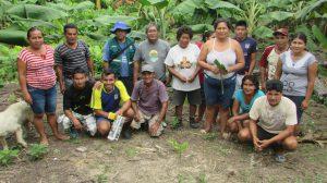 Senasa - Productores de Loreto son reconocidos como expertos en MIP plátano