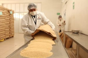 Senasa certificó 401 toneladas de quinua para exportación en el 2017