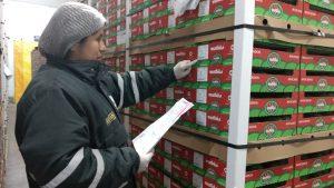 Senasa certificó más de 35 mil toneladas de palta para la exportación