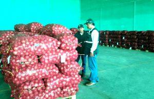 Senasa certificó más de 7 mil toneladas de cebolla fresca para exportación