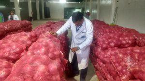 Senasa certifica doce toneladas de cebolla fresca para su exportación a Chile