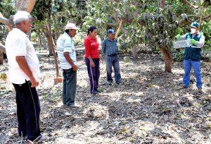 Senasa evalúa más de 800 hectáreas de cultivos para el control de roedores en La Libertad