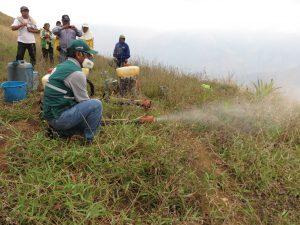 Senasa evalúa presencia de langostas en 3600 hectáreas de vegetación silvestre y cultivos