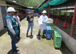 Senasa supervisa condiciones sanitarias de centro de faenamiento avícola en Apuriamc