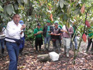 Senasa en Huánuco - Cacao
