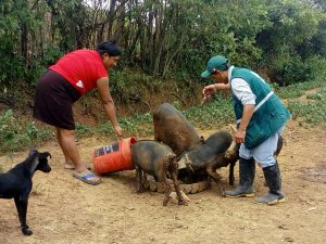 Minagri - Realizan vigilancia sanitaria preventiva en produccion agricola y ganadera en Lambayeque - Senasa