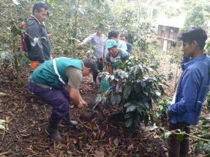 Agricultores de Junín fortalecen conocimiento en muestro de suelos para mejorar producción de café